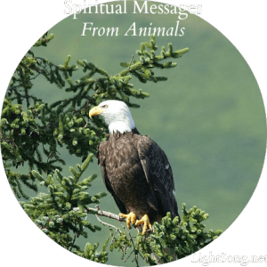 Are you receiving spiritual messages from animals?